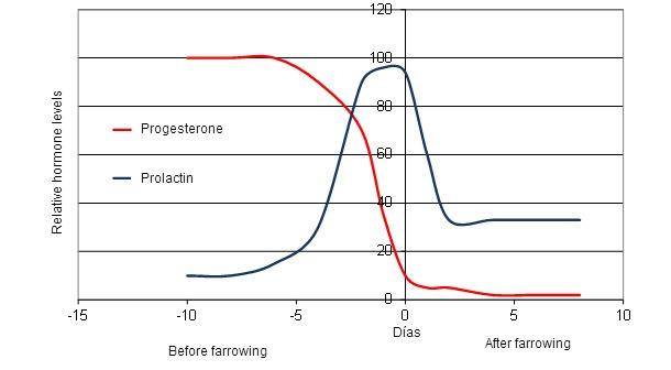 Cambios hormonales de la cerda alrededor del parto