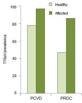 TTSuV prevalence
