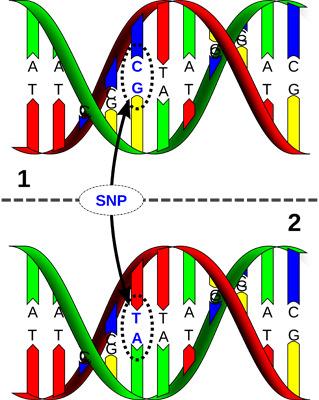 Genomics – linking SNP's with performance