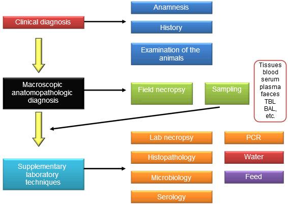 General diagram of the diagnosis process