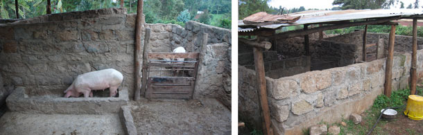 Improved pig sties in Kiambu, Kenya