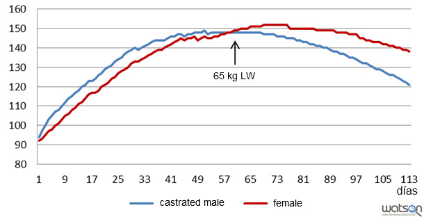 Protein deposition (g/day) of castrated males and females of the genetic strain B