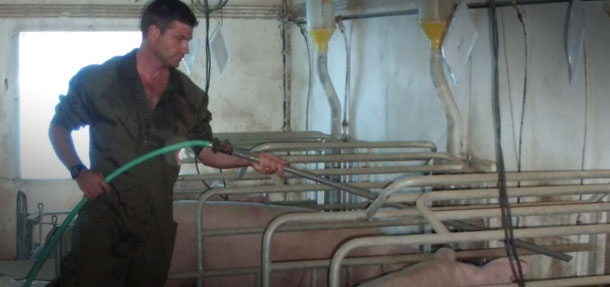 If we have a hose in each farrowing room, the supplementation with water several times a day is an easy process