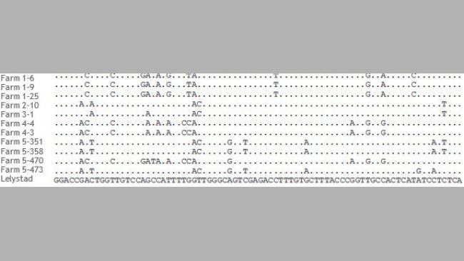Portion of the alignment of ORF5 sequences of PRRSV strains from 5 different farms