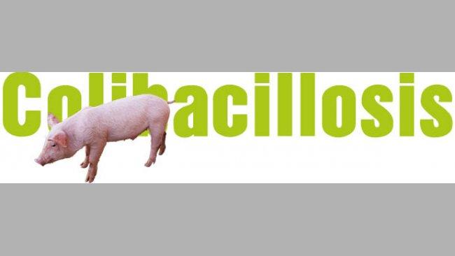 Colibacilosis