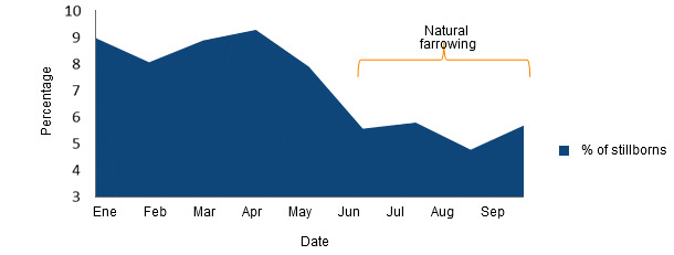 Changes in the percentage of stillborn piglets before and after allowing the sows to natural farrow naturallying