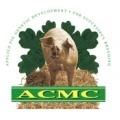 acmc_pig.jpg