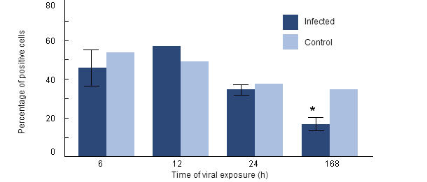 Phagocytosis rate of H. parasuis by porcine alveolar macrophages collected from pigs previously infected with PRRSV
