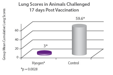 Lung Scores in Animals Challenged 17 days Post Vaccination