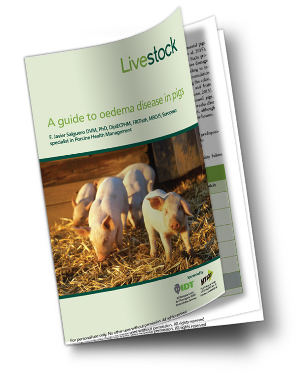 A guide to oedema disease in pigs