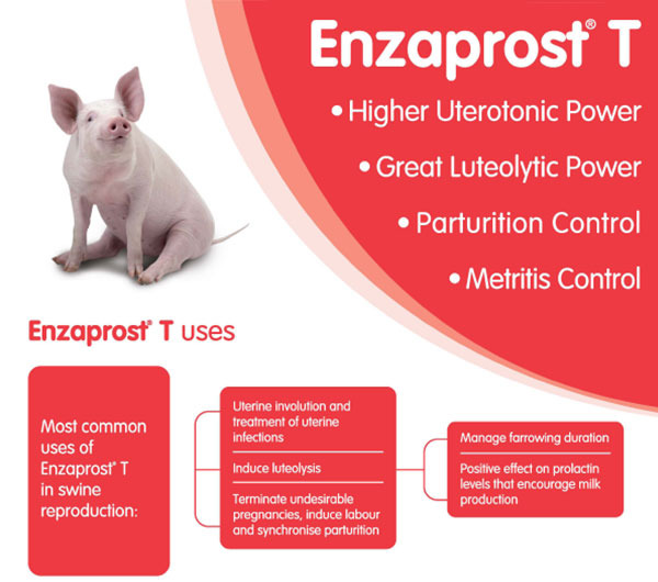 Enzaprost T uses
