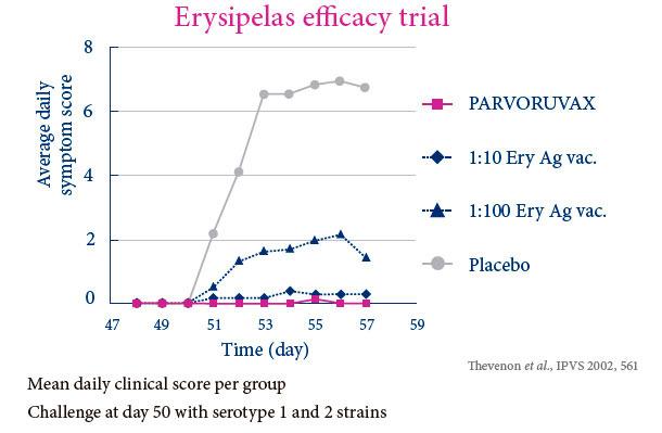 Erysipelas efficacy trial