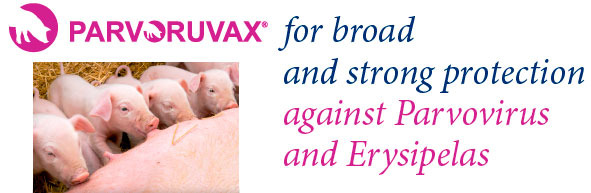 Parvoruvax for broad and strong protection against Parvovirus and Erysipelas