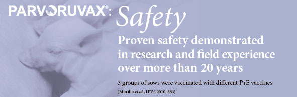 Parvoruvax: Safety. Proven safety demonstrated in research and field experience over more than 20 years