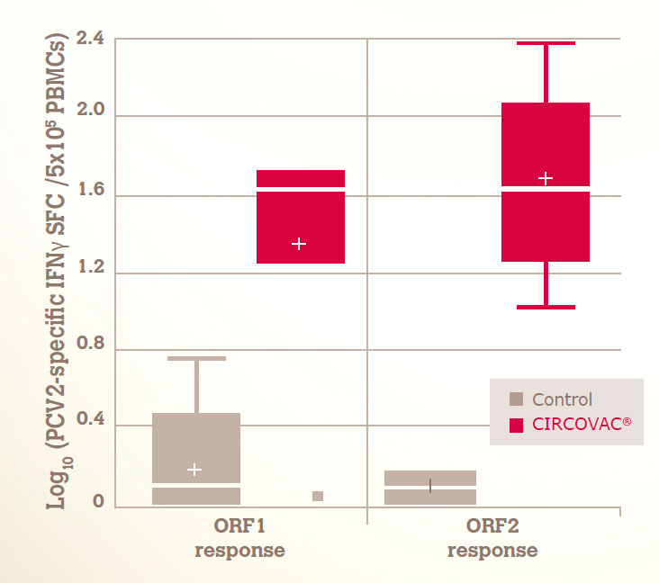 A STRONG CMI RESPONSE AGAINST BOTH ORF1 & ORF2 PROTEINS