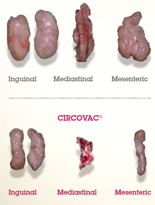 lymphoid lesions