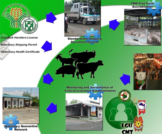 Critical Pathway of FMD Control and Eradication in the Philippines